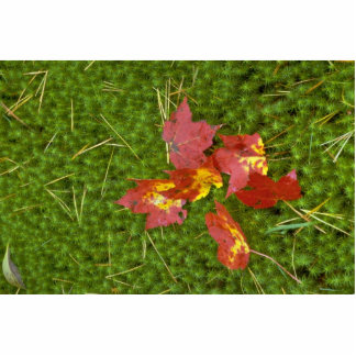 Red colored maple leaves fallen on carpet of moss standing photo sculpture