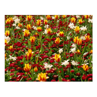Red Colorful High Park in spring, Toronto, Canada Postcard