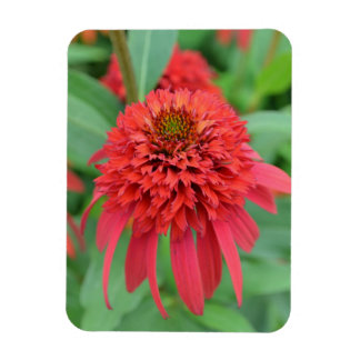 Red Coneflowers Rectangle Magnet