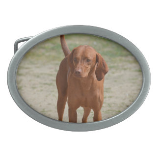 Red Coonhound Oval Belt Buckle