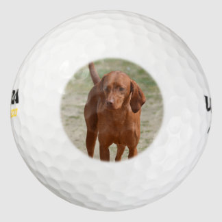 Red Coonhound Pack Of Golf Balls