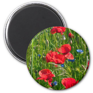 Red corn poppy with blue cornflowers magnet