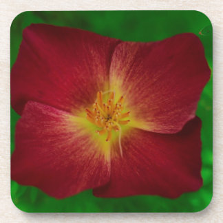 Red Cosmos Flower Design Coaster