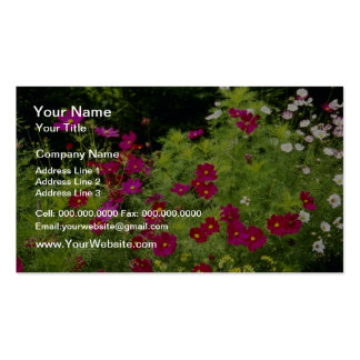 Red Cosmos flowers Business Card