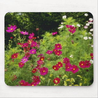 Red Cosmos flowers Mouse Pad