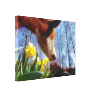 Red Cow and Yellow Daffodils Canvas Print