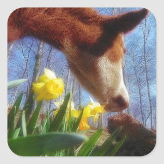 Red Cow and Yellow Daffodils Square Sticker
