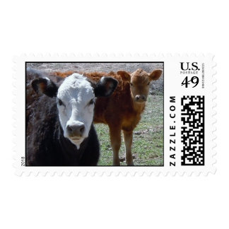Red Cow, Black & White Cow Postage Stamps