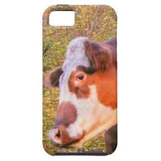 Red Cow in the Autumn Sunlight iPhone SE/5/5s Case
