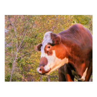 Red Cow in the Autumn Sunlight Postcard