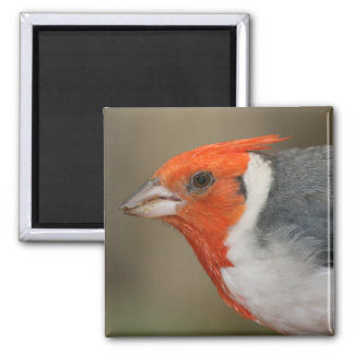 Red Crested Cardinal Magnet