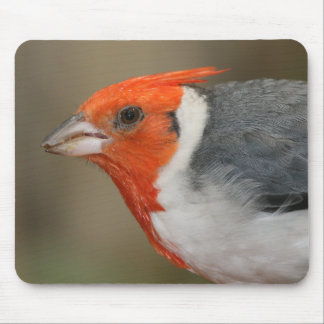 Red Crested Cardinal Mouse Pad
