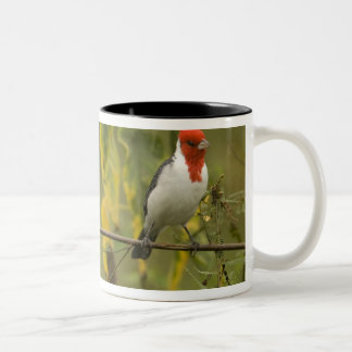 Red-Crested Cardinal Pair, Paroaria coronata, Two-Tone Coffee Mug