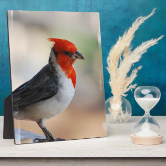 Red Crested Cardinal Display Plaque