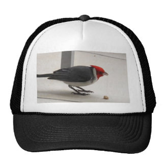 Red Crested Cardinal Trucker Hat