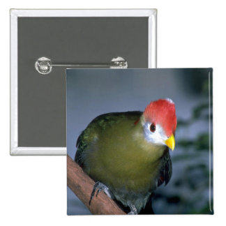 Red-crested turaco, Africa Pins