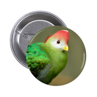 Red-Crested Turaco bird Pinback Button