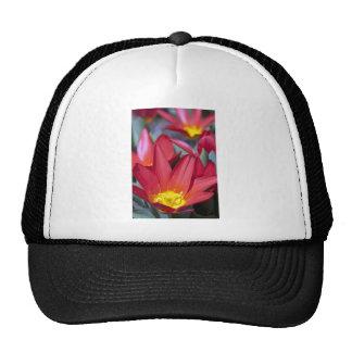 Red Crocus Hat