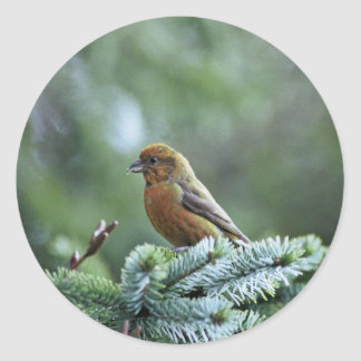 Red Crossbill Round Stickers