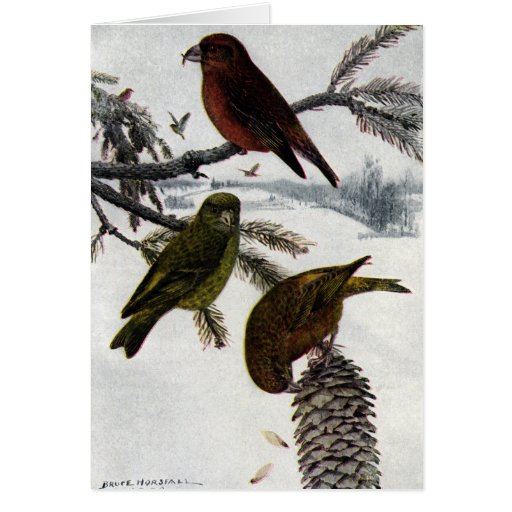 Red Crossbills and Pinecone Greeting Card