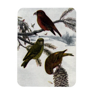 Red Crossbills and Pinecone Magnet