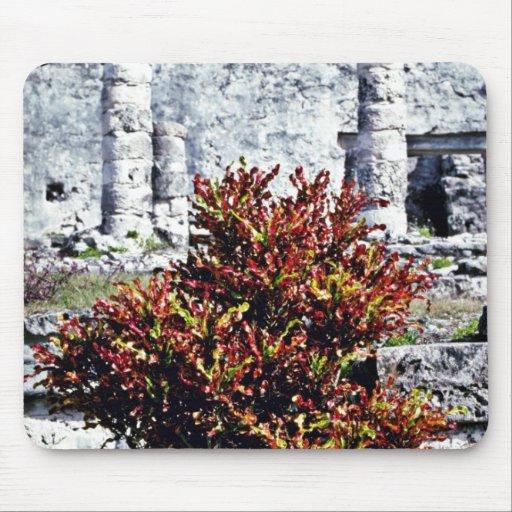 Red Croton Bush At Mayan Ruins, Tulum Mouse Pad