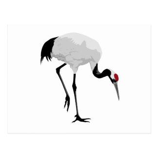 Red-Crowned Crane (a.k.a. Japanese Crane) Postcard