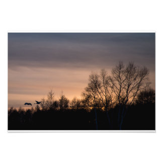 Red- Crowned Crane into the Sunset Photo