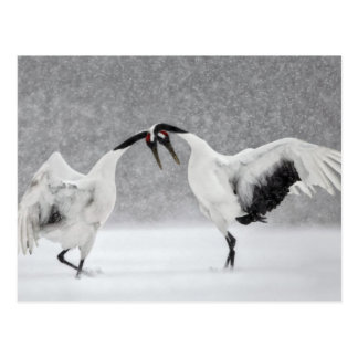 Red Crowned Cranes In Snow Postcard