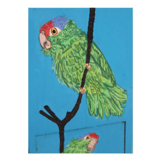 red-crowned green parrot photo print
