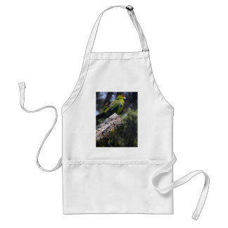 Red-crowned Parakeet Adult Apron