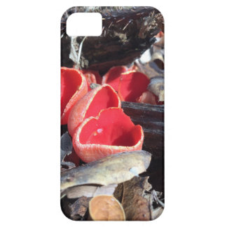 Red Cup Fungus iPhone SE/5/5s Case