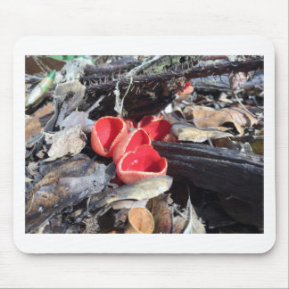 Red Cup Fungus Mouse Pad