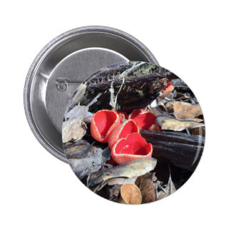 Red Cup Fungus Pinback Button