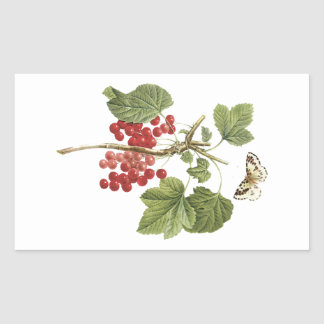 red currant(Ribes rubrum) by Redouté Rectangular Sticker