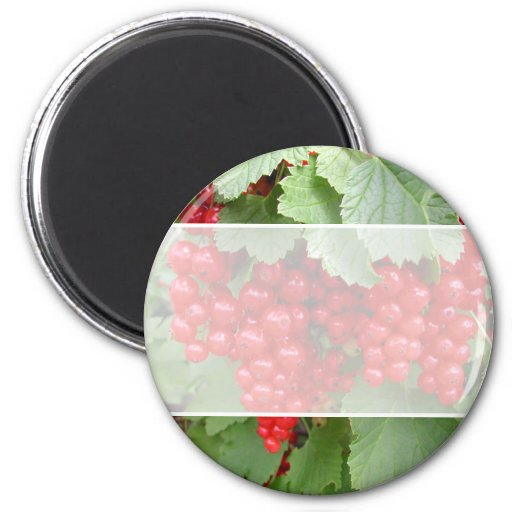 Red Currants on the Plant. Green Leaves. 2 Inch Round Magnet