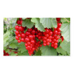 Red Currants on the Plant. Green Leaves. Business Card Template