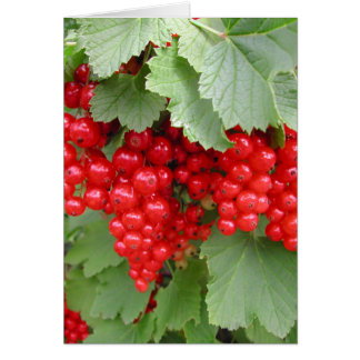 Red Currants on the Plant. Green Leaves. Card