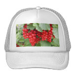 Red Currants on the Plant. Green Leaves. Hats