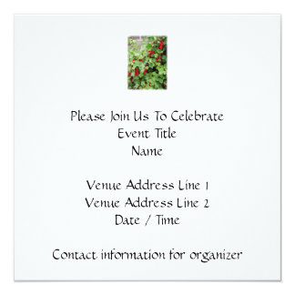 Red Currants on the Plant. Green Leaves. 5.25x5.25 Square Paper Invitation Card