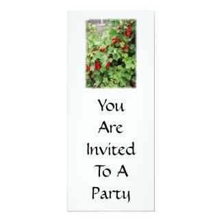Red Currants on the Plant. Green Leaves. 4x9.25 Paper Invitation Card