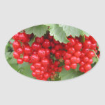 Red Currants on the Plant. Green Leaves. Sticker
