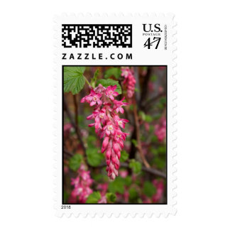 Red Current Flower Postage