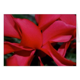 Red Cyclamen Card