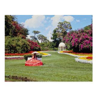 Red Cyprus Gardens, Florida, U.S.A. flowers Postcard