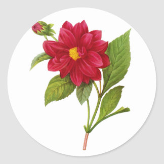 Red Dahlia by Pierre-Joseph Redoute Classic Round Sticker