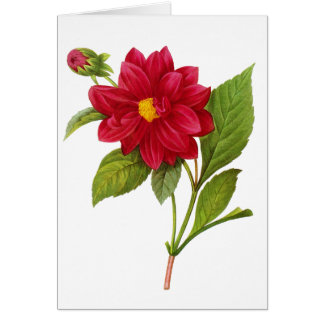 Red Dahlia by Pierre-Joseph Redoute Greeting Card