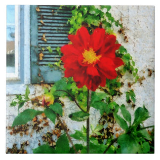 Red Dahlia By Window Ceramic Tile