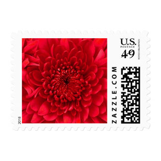 Red Dahlia Chrysanthemum Floral Postage Stamps