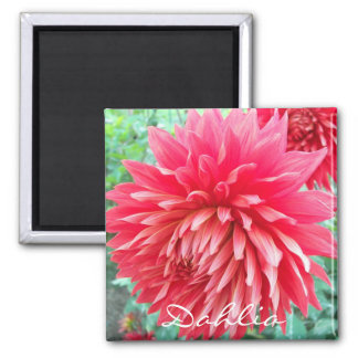 Red Dahlia Floral 2 Inch Square Magnet